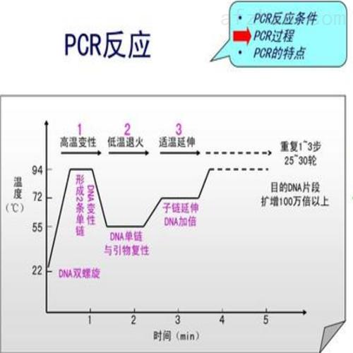 丙酸蛛网菌探针法荧光定量PCR试剂盒说明