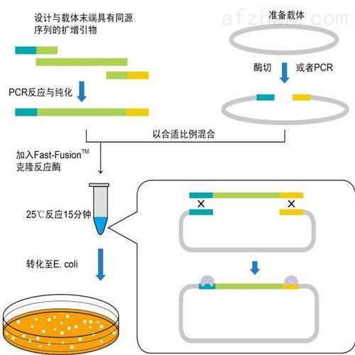 丝状网尾线虫探针法荧光定量PCR试剂盒厂家