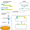 50T克雷伯菌通用探针法荧光定量PCR试剂盒价格